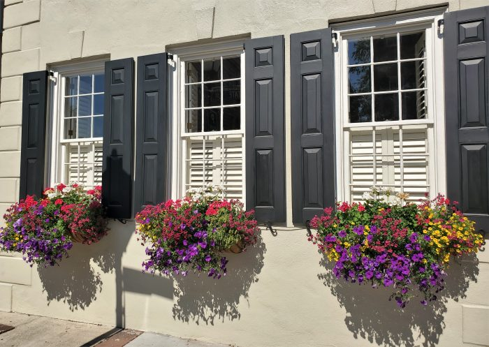 These beautiful window boxes can be found on the house at the corner of State Street and Lodge Alley. Charleston window boxes are amazing!