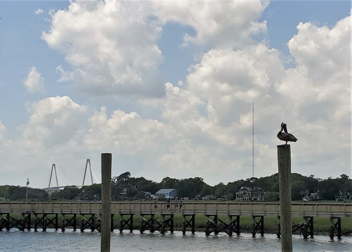 While buying fresh off the boat shrimp from Magood Seafood on Shem Creek, I couldn't resist a photo of this preening pelican and the Cooper River Bridge. While not strictly in Charleston, it sure is a glimpse of Charleston.