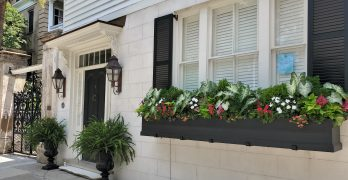 This huge and handsome window box can be found on Legare Street.