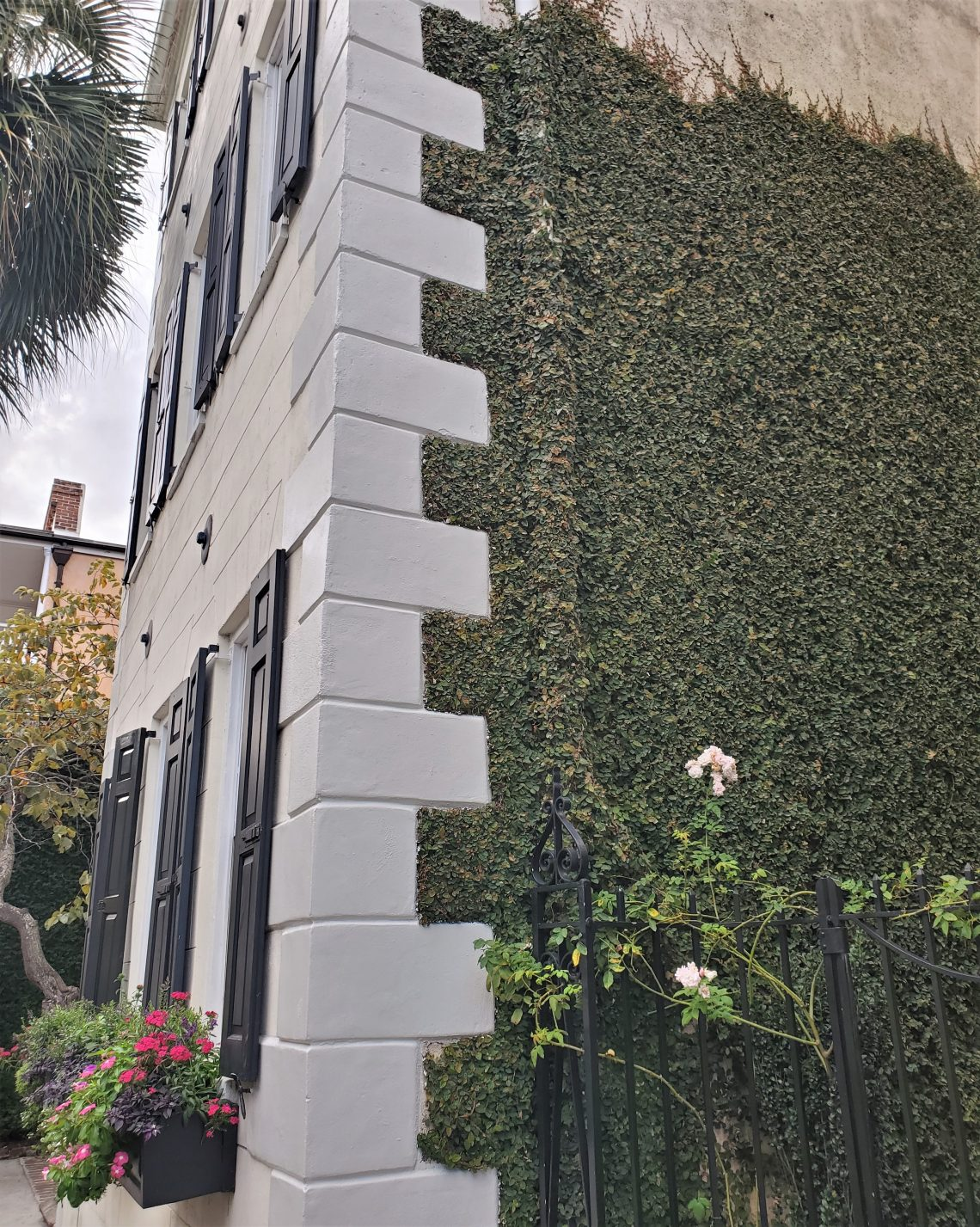 The toothy trim on this Queen Street house is called quoins. Quoins are found on many Charleston masonry and stucco buildings. The quoins usually serve two purposes — to strengthen the construction and for decoration. Here they are complemented by some very well trained ivy.