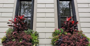 These wonderful window boxes are on the Patrick O'Donnell House (aka O'Donnell's Folly) on King Street. The largest Italianate house in Charleston, it will always be linked to President Barack that he directly referred to the house's amazing piazzas in his first presidential election night acceptance speech
