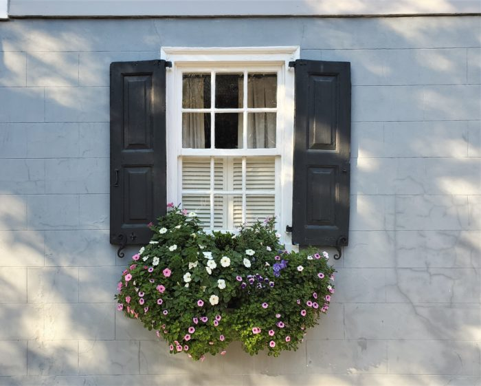 With the positioning of many Charleston houses right up to the sidewalk (particularly, the sideways facing Charleston single houses), window boxes often replace having a front yard -- and they are generally treated with the same loving care.