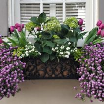 This beautiful spring flower box can be found on Tradd Street.