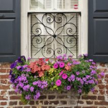 Some beautiful flowers to help celebrate Easter. Charleston has a strong link to Easter as it is believed that Charleston was founded on April 6, 1670, which was Easter Day (350 years ago!). (Thanks to all the smart people at Bulldog Tours for that juicy historical nugget!)