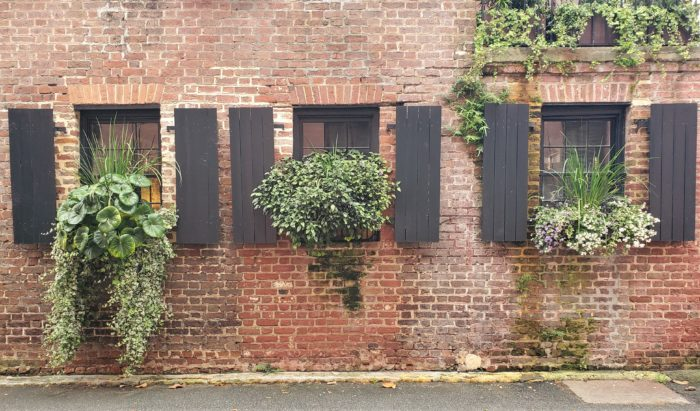 These cool window boxes are on Elliott Street, right around the corner from Rainbow Row.
