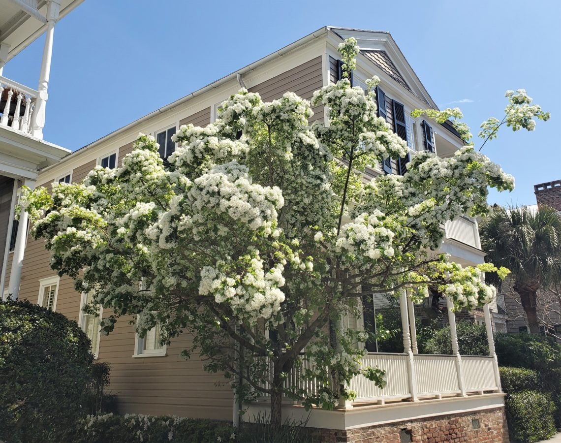 Spring in Charleston is gorgeous. This pretty scene was on lower King Street. One of the oldest streets in Charleston, it was named after King Charles II of England.