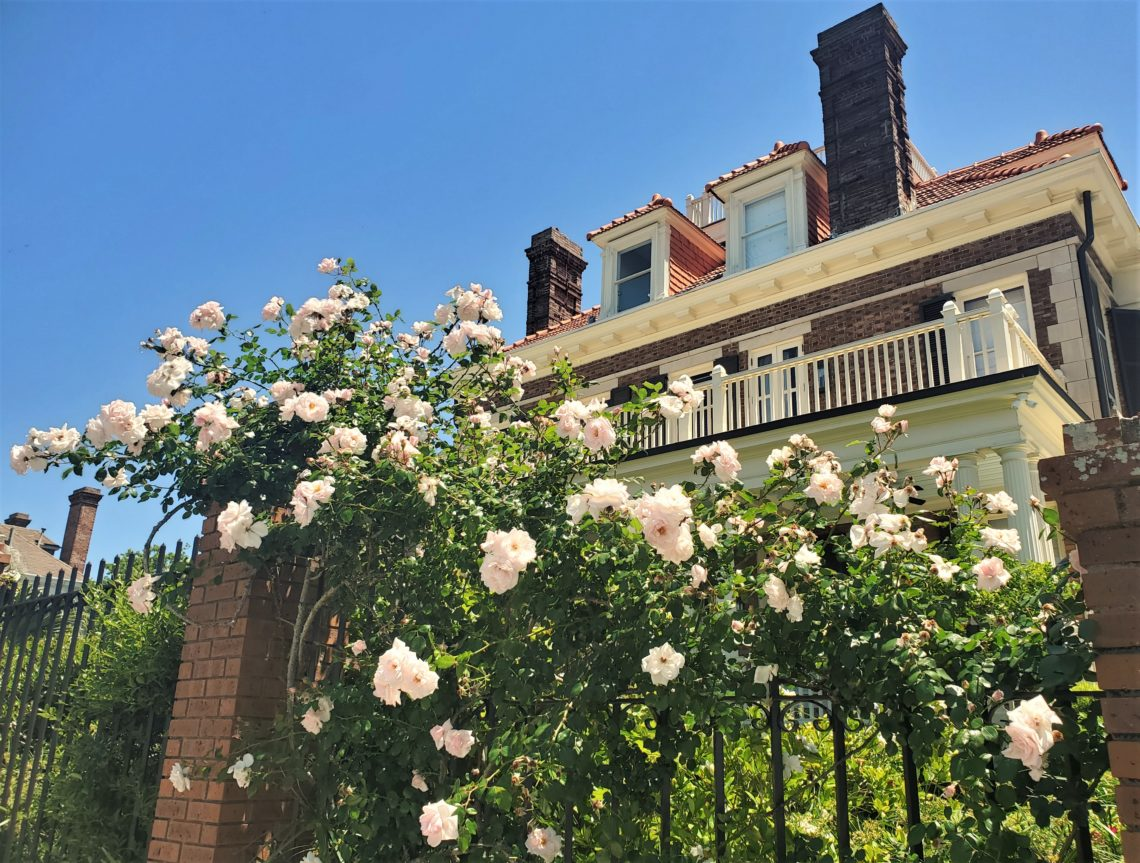 These roses nicely accent the C. Bissell Jenkins House, located at the corner of Murray Boulevard and Limehouse Street. The house was the first built along Murray (the Low Battery) in 1913.